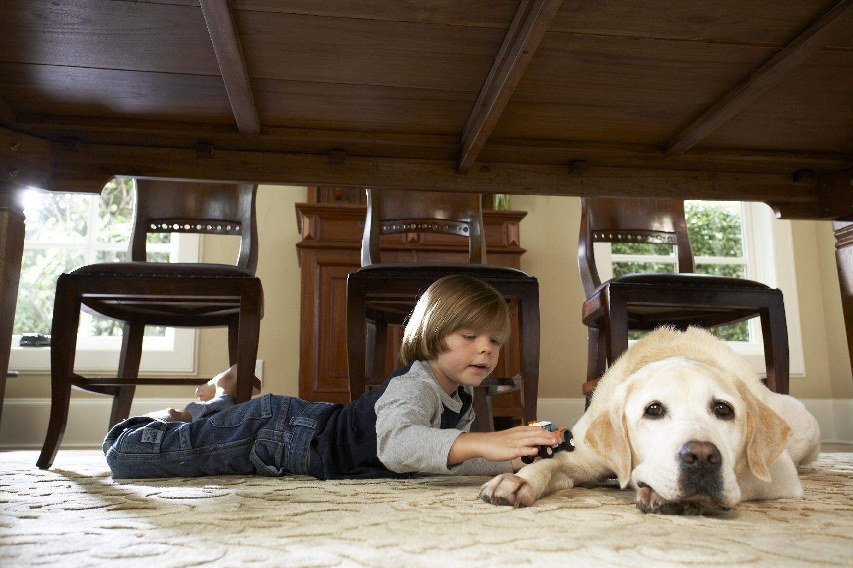 boy and dog playing